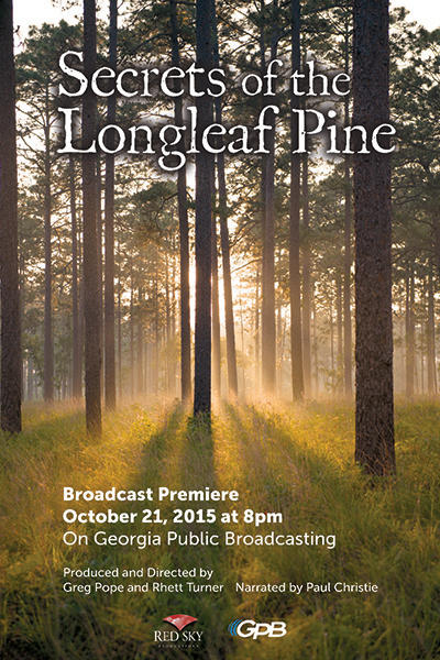 Secrets of the Long Leaf Pine