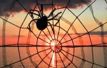 17 Halloween spider & sunset