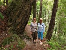 Butano State Redwood Park