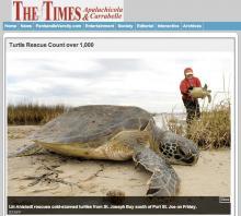 Turtle_Rescue
