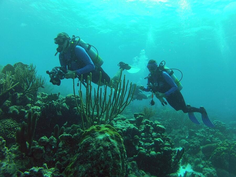 13 Diving along reef drop-off