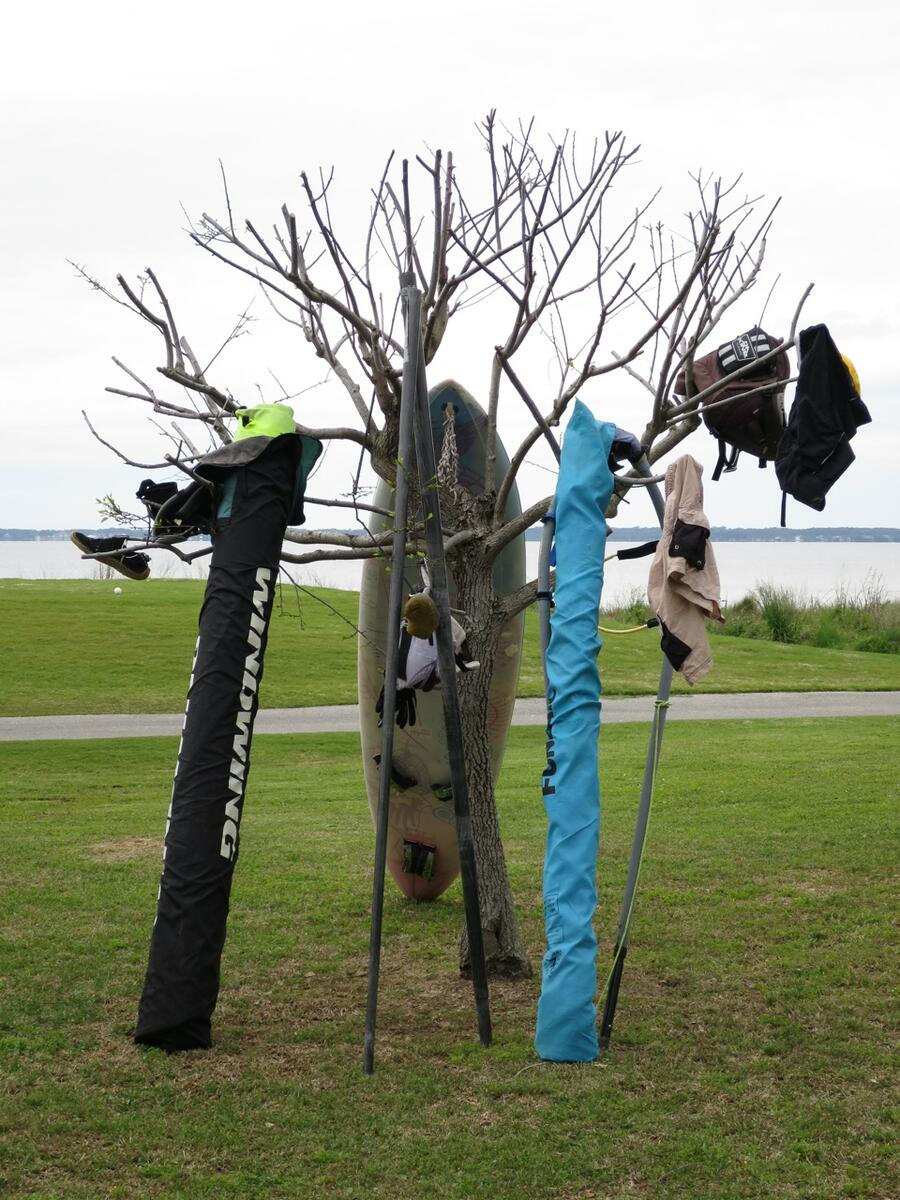 7 Drying tree